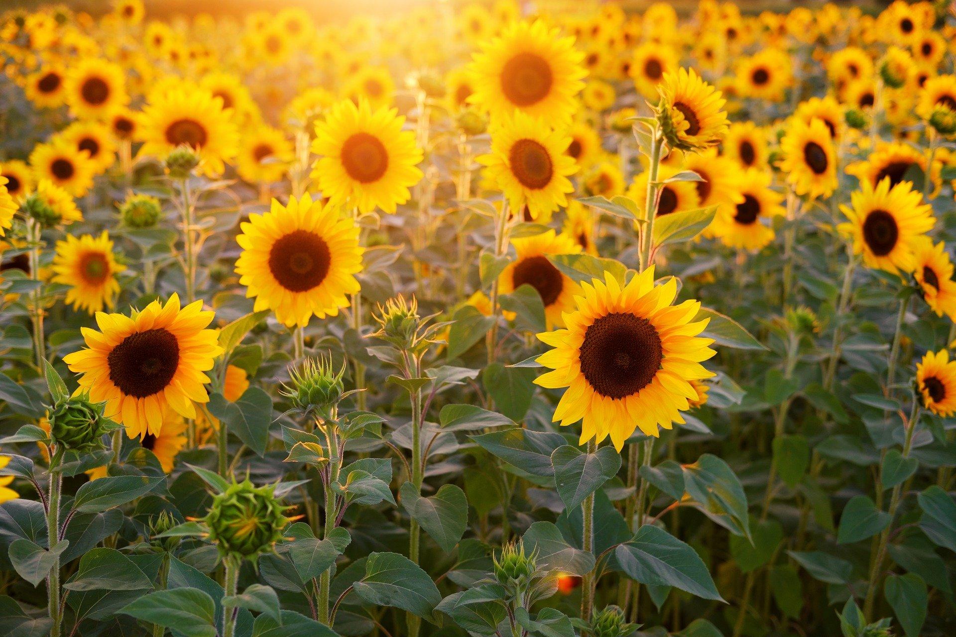 Unser Sonntag: 07.03.21  – Ein Sonntags-Impuls zu Okuli