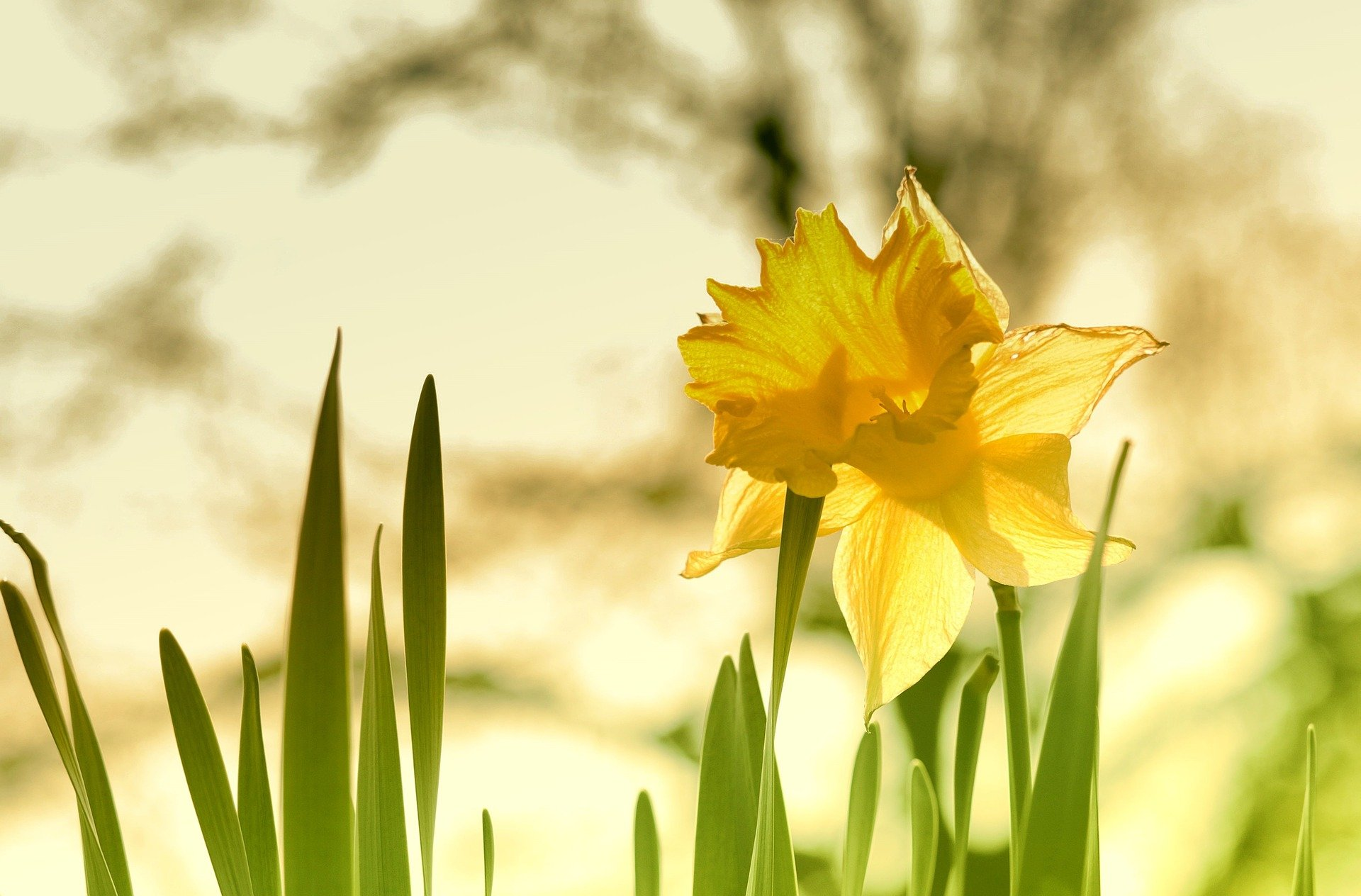 Unser Feiertag: 04.04.21  – Ein Impuls zum Ostersonntag